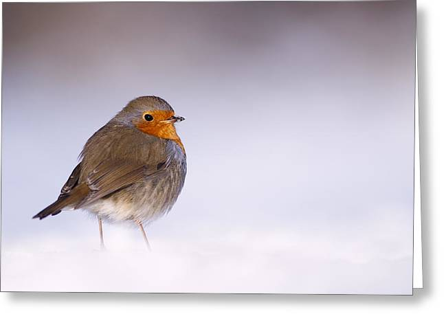 Passerine Greeting Cards - Cold Feet Greeting Card by Roeselien Raimond