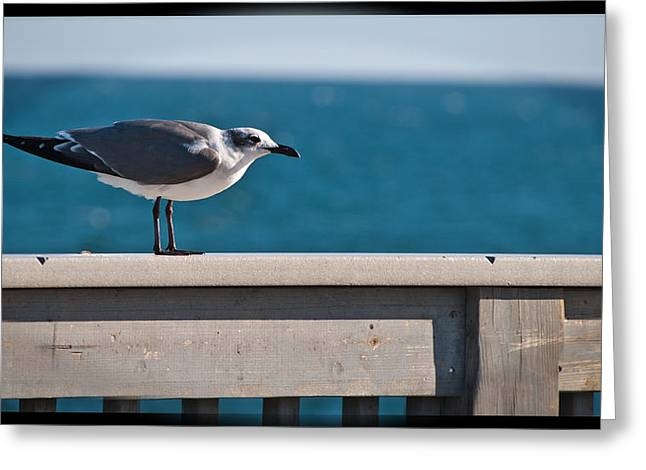 Panama City Beach Fl Greeting Cards - Cold Gull Greeting Card by George Taylor