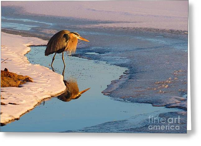 Wadingbird Greeting Cards - Cold heron Greeting Card by Rrrose Pix