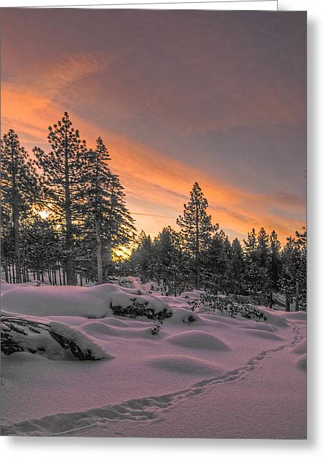 Recently Sold -  - Snow Scene Landscape Greeting Cards - Cold Morning Greeting Card by Maria Coulson