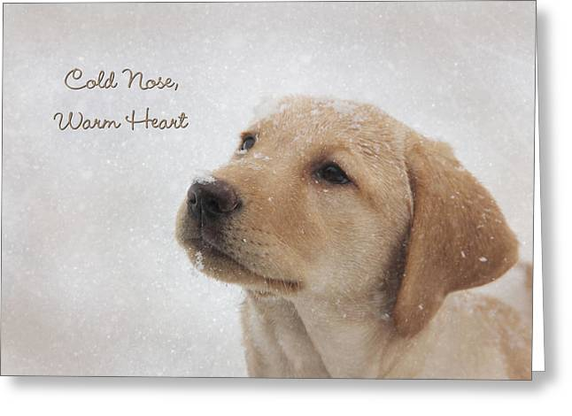 Best Sellers -  - Puppies Photographs Greeting Cards - Cold Nose Warm Heart Greeting Card by Lori Deiter