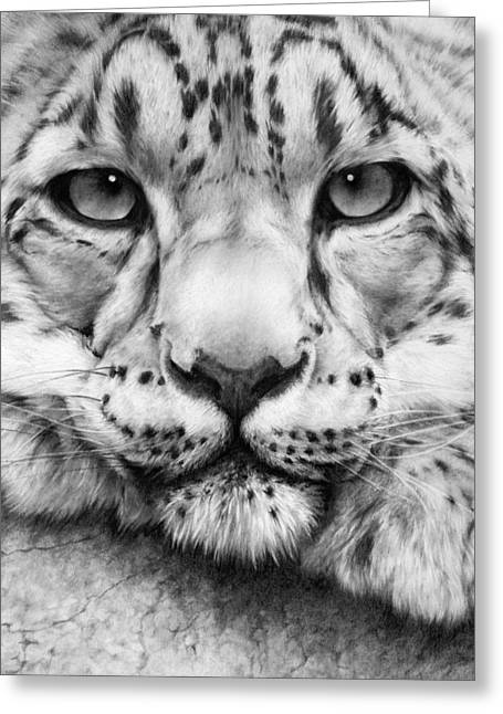 Charcoal Portrait Greeting Cards - Cold Stare - drawing Greeting Card by Natasha Denger