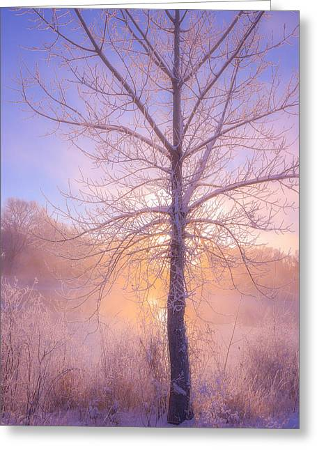 Foggy Landscape Greeting Cards - Cold Winter Morning Greeting Card by Darren  White