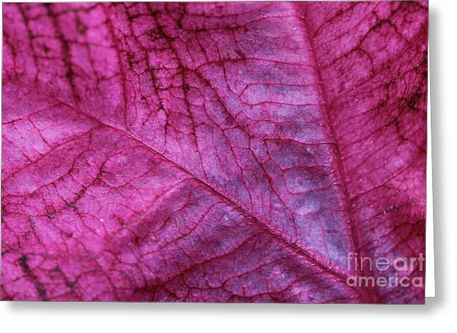 Foliage Fragrance Greeting Cards - Coleus Leaf Greeting Card by Corey Ford