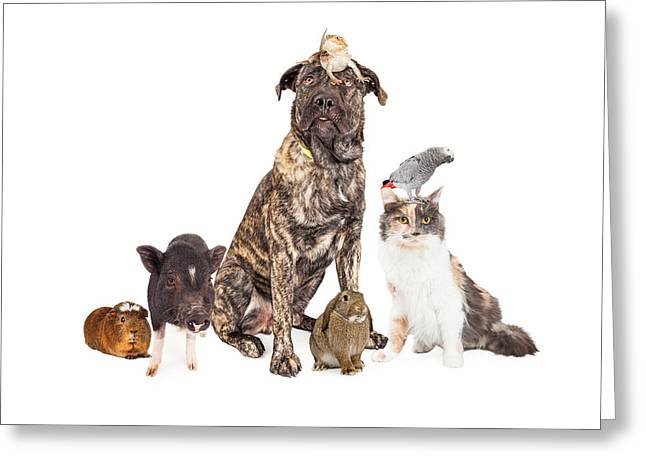 Shepherds Greeting Cards - Collage of Household Pets Greeting Card by Susan  Schmitz