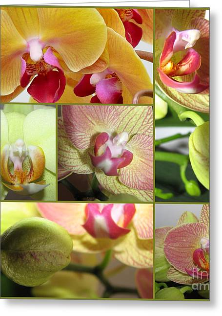 Elena Yakubovich Photographs Greeting Cards - Collage Orchids 01Yellow Green - Elena Yakubovich Greeting Card by Elena Yakubovich