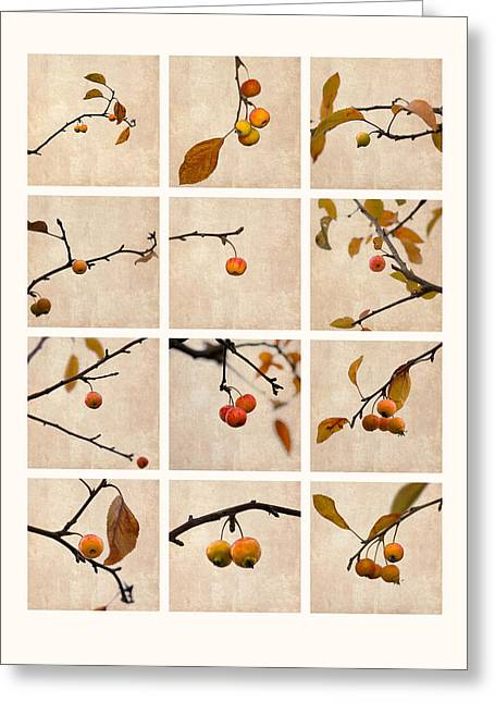 Fruit Tree Art Greeting Cards - Collage Paradise Apple Greeting Card by Alexander Senin