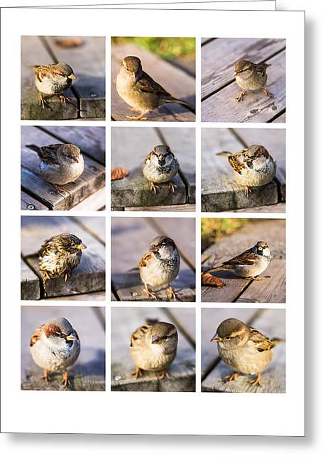 Twitter Greeting Cards - Collage Twitting Friends Greeting Card by Alexander Senin