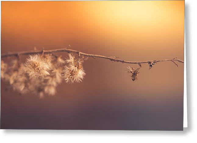 Dusk Greeting Cards - Collapse Into The Arms Of Night Greeting Card by Shane Holsclaw