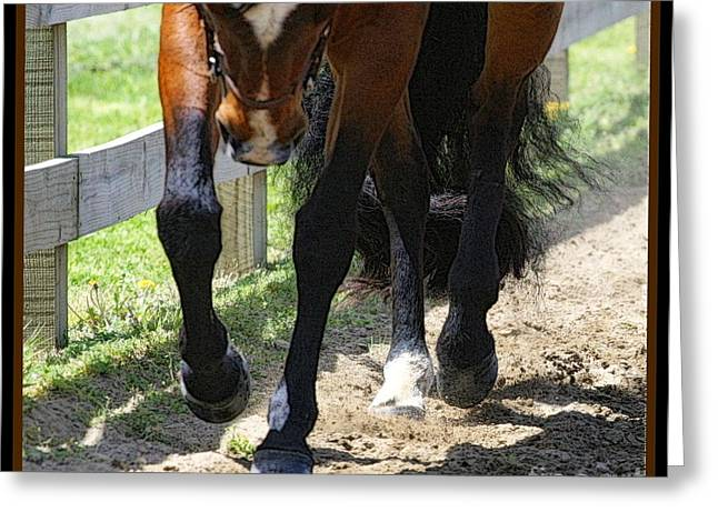 The Horse Greeting Cards - Collected Greeting Card by Ann Butler