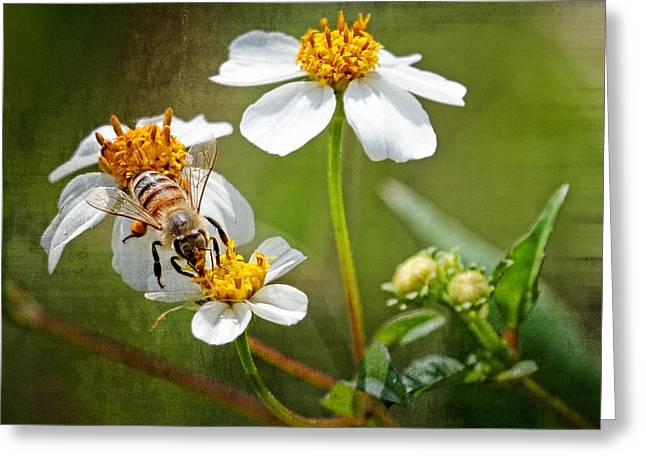 Renewing Greeting Cards - Collecting Pollen Greeting Card by Dawn Currie
