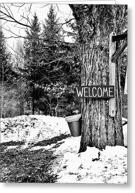 Maine Agriculture Greeting Cards - Collecting Sap Greeting Card by Laura Mace Rand