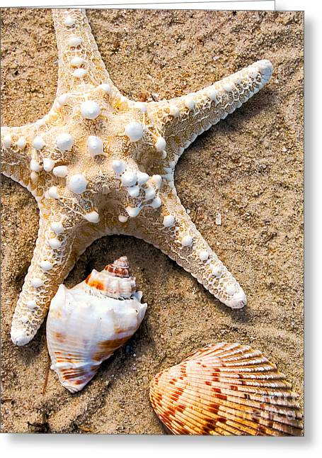 Ocean Art. Beach Decor Greeting Cards - Collecting Shells Greeting Card by Colleen Kammerer
