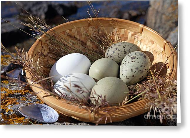 Gathering Greeting Cards - Collection of wild seabirds eggs  Greeting Card by Ladi  Kirn