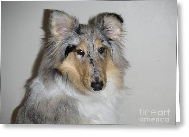 Collie Greeting Card by David Grant