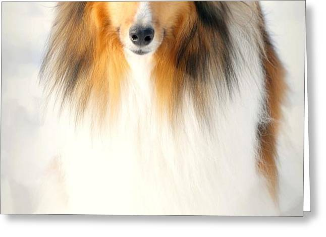 Collie  Greeting Card by Diana Angstadt