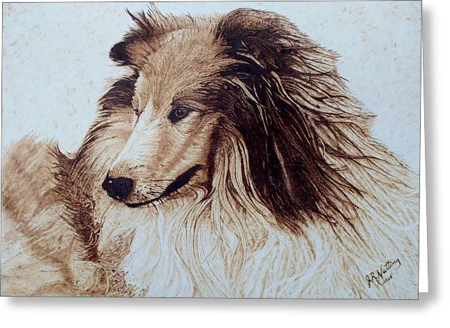 Collie Pyrography Greeting Cards - Collie Greeting Card by Jim Nutting