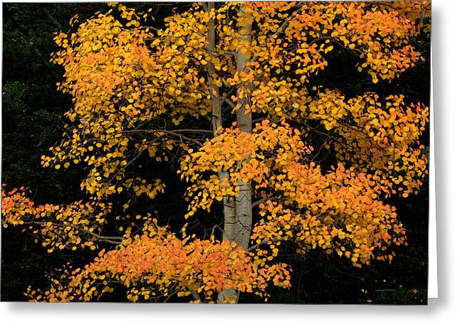 Color And Contrast 2 Greeting Card by Leland D Howard