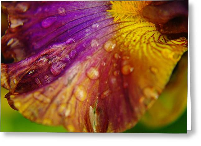 Living Things Greeting Cards - Color And Droplets Greeting Card by Jeff  Swan