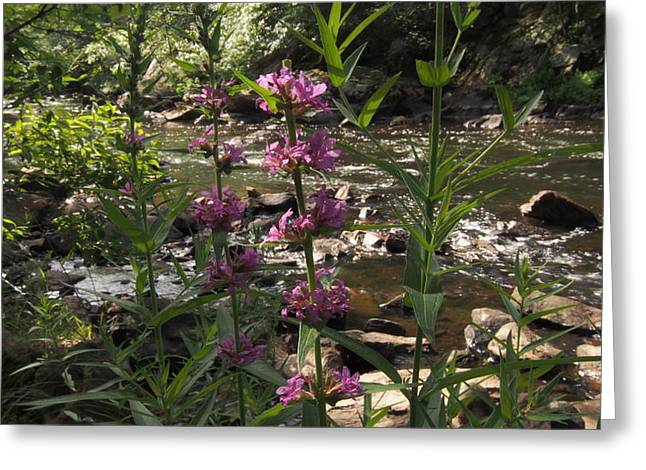 Blackstone River Greeting Cards - Color and shallows Greeting Card by Ted Rickson