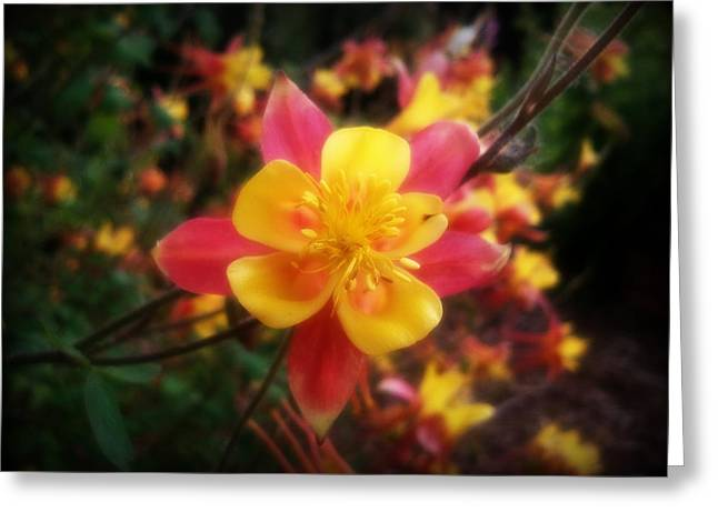 Color Burst Greeting Card by Heather L Wright