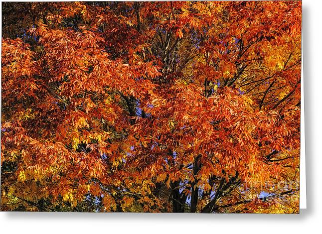 Redish Greeting Cards - Color Explosion Greeting Card by Nancy Marie Ricketts