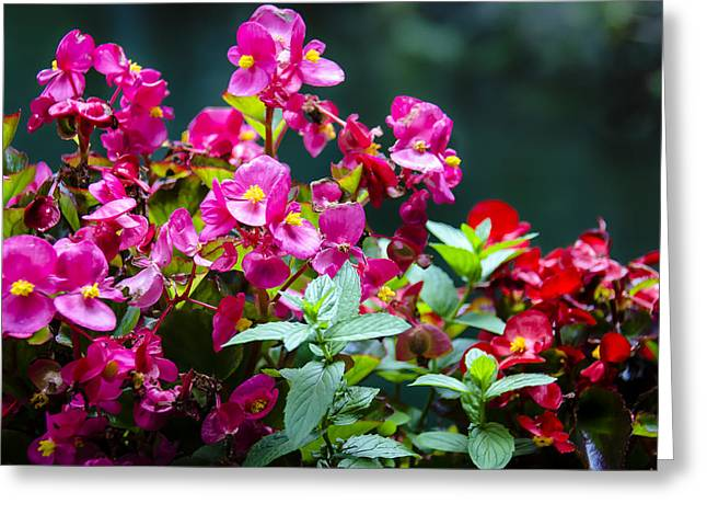 Color Explosion Greeting Card by Sotiris Filippou