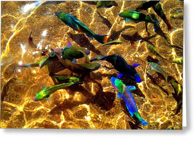 Color Fish Greeting Card by Saki Art