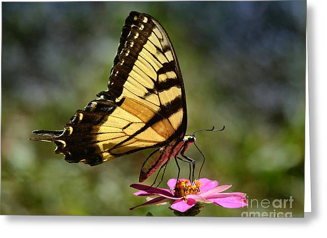 Zinna Greeting Cards - Color Me Beautiful Greeting Card by Nava  Thompson