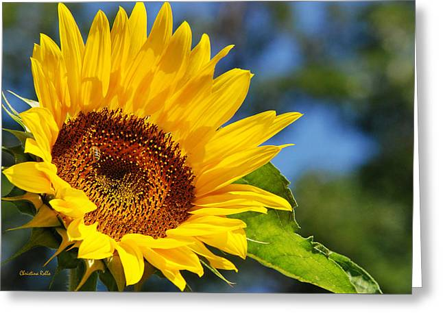 Yellow Sunflower Greeting Cards - Color Me Happy Sunflower Greeting Card by Christina Rollo