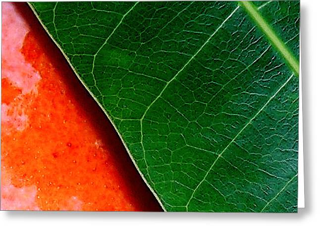 Mango Greeting Cards - Color Me Mango Sweet And Spicy Greeting Card by James Temple