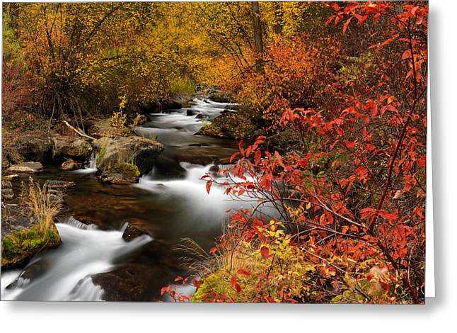 Color Of Autumn Greeting Card by Leland D Howard