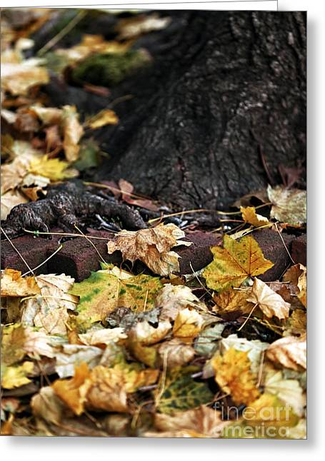 Photos Of Autumn Greeting Cards - Color of Change Greeting Card by John Rizzuto