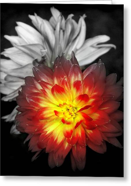 Dinner-plate Dahlia Greeting Cards - COLOR of LIFE Greeting Card by Karen Wiles