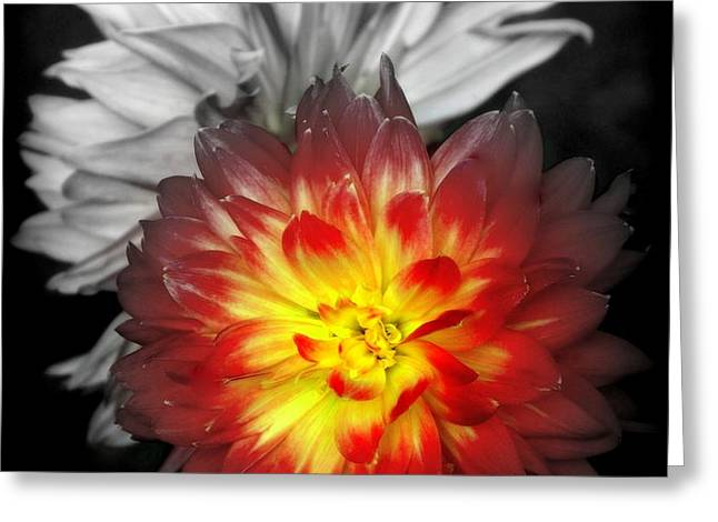 COLOR of LIFE Greeting Card by KAREN WILES