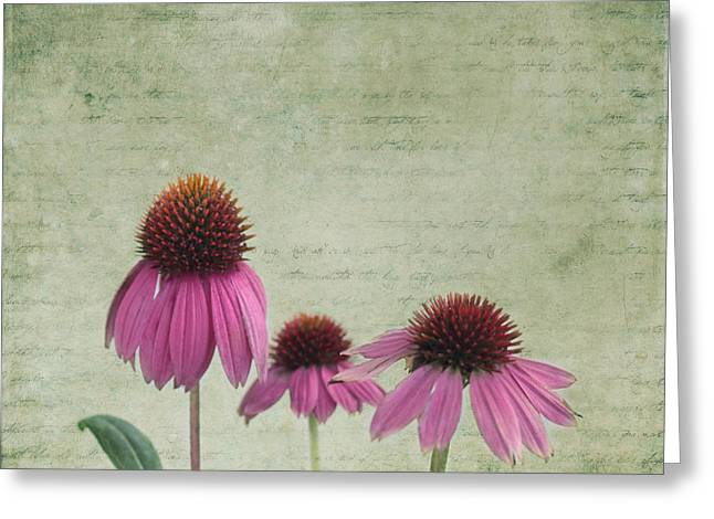 Cone Flowers Greeting Cards - Color of Spring Greeting Card by Kim Hojnacki