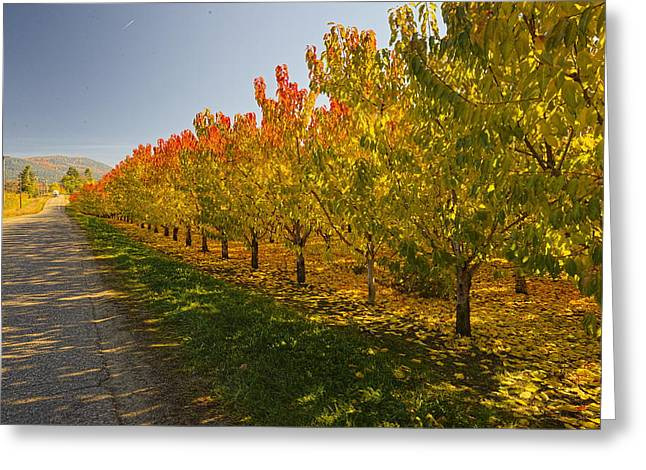 Color Of The Orchard-country Roads Greeting Card by Evan Spellman
