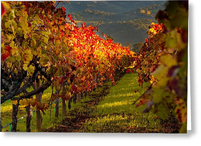Red Wine Greeting Cards - Color On the Vine Greeting Card by Bill Gallagher