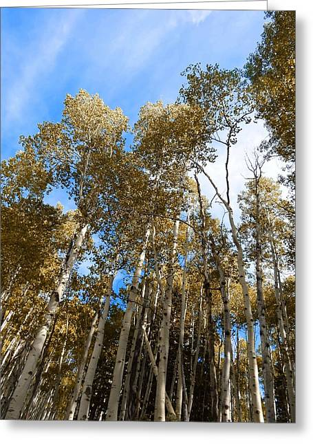 Aspens In Autumn Leaves Greeting Cards - Colorado Aspen Autumn Color Greeting Card by Dan Sproul