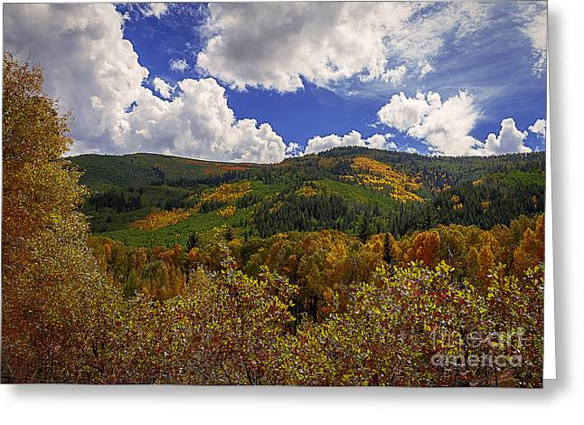 Colorado Autumn Afternoon Greeting Card by Janice Rae Pariza