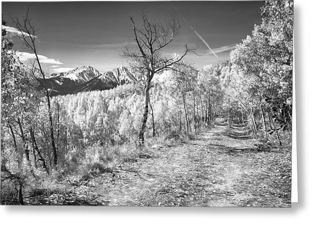 Snow Tree Prints Greeting Cards - Colorado Backcountry Autumn View BW Greeting Card by James BO  Insogna