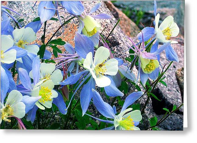 Julie Magers Soulen Greeting Cards - Colorado Blue Columbine Greeting Card by Julie Magers Soulen