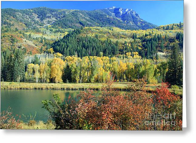 Change Of Seasons Greeting Cards - Colorado Colors Greeting Card by Bob Hislop