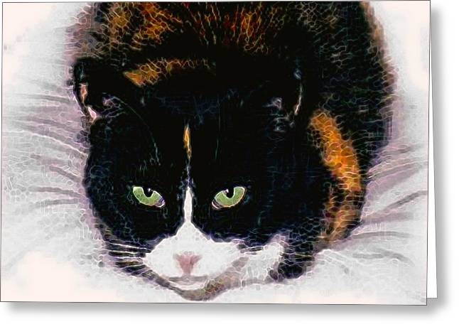 Photo Of Calico Cat Greeting Cards - Colorado Greeting Card by Dale   Ford