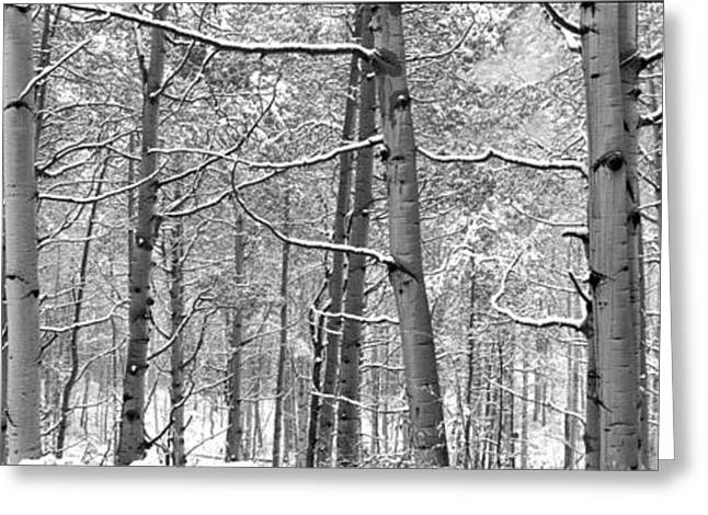 Wintry Greeting Cards - Colorado First Snow Greeting Card by Eggers   Photography