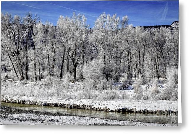 Snow Scene Landscape Greeting Cards - Colorado Hoarfrost Greeting Card by Janice Rae Pariza