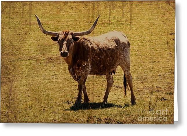 West Greeting Cards - Colorado Longhorn Greeting Card by Janice Rae Pariza
