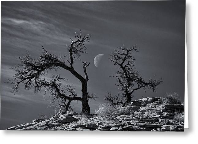 Fine Art White Nature Trees Greeting Cards - Colorado National Monument Moonrise Greeting Card by Darren  White
