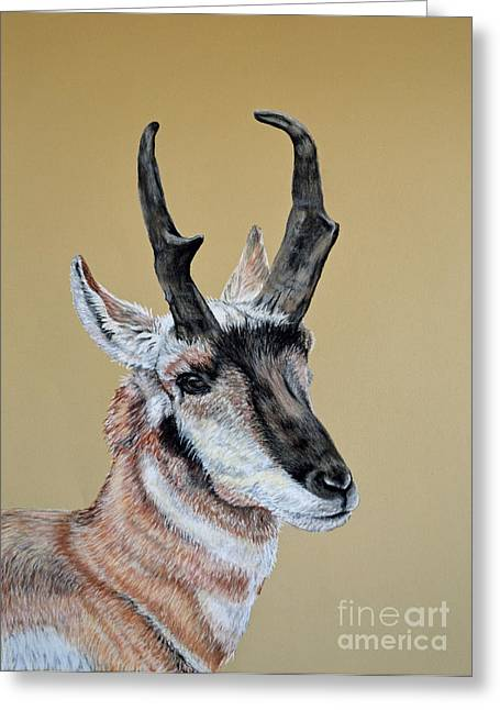 Horns Pastels Greeting Cards - Colorado Plains Antelope Greeting Card by Ann Marie Chaffin