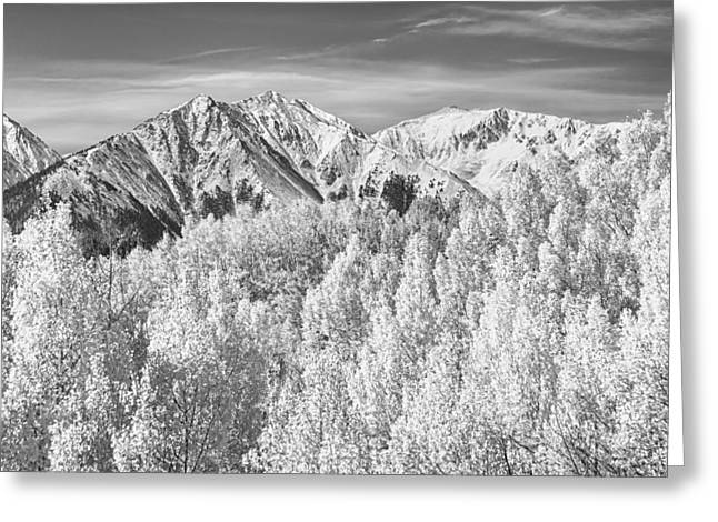 Snow Tree Prints Greeting Cards - Colorado Rocky Mountain Autumn Beauty BW Greeting Card by James BO  Insogna